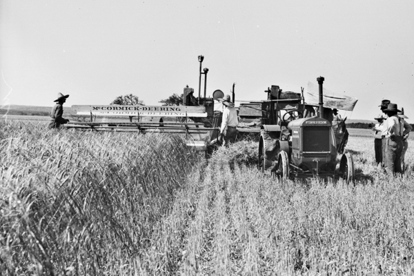 1927 Kallison Ranch Thresher and Wheat Crop 